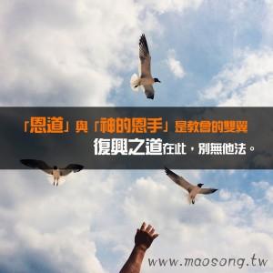 seagulls-598184_1280
